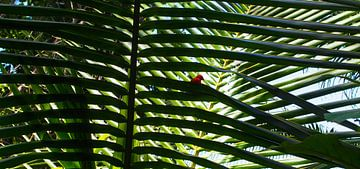Anse Cocos, La Dique - Seychelles von Van Oostrum Photography