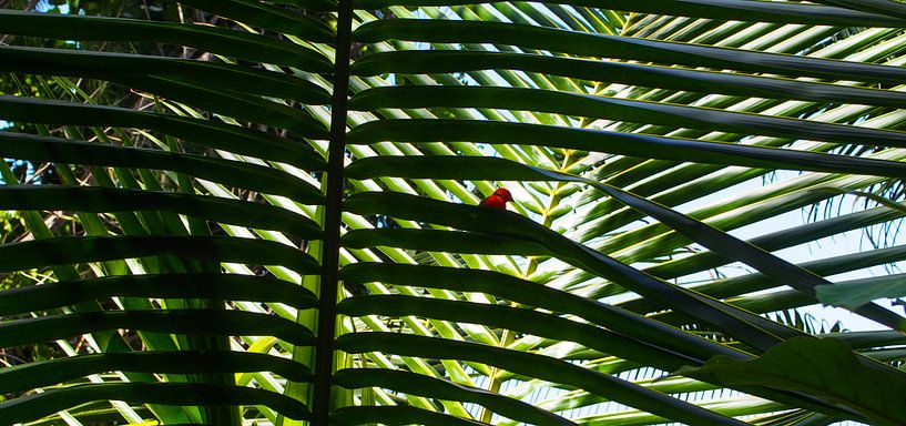 Anse Cocos, La Dique - Seychelles van Van Oostrum Photography