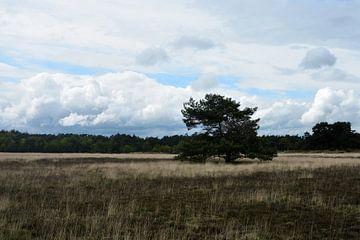 Een grove den op een vlakte met een wolkenlucht van Gerard de Zwaan