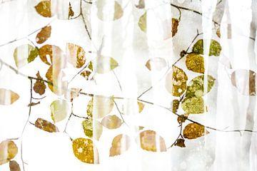 Muster der Herbstblätter von Sam Mannaerts Natuurfotografie