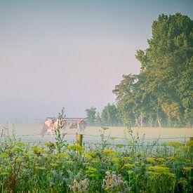 Koeien in een weiland van Martijn Tilroe