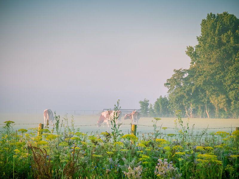 Vaches dans un pâturage sur Martijn Tilroe