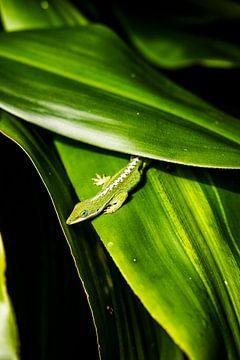 Ein grüner Freund in Kona | Hawaii von Teuntje Fleur