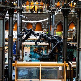 Universitätsmuseum für Naturgeschichte, Oxford von Nynke Altenburg