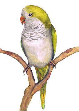 Quaker-Papageis Aquarellzeichnung von Bianca Wisseloo