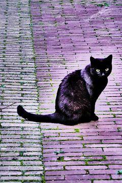 Utrecht - Zwarte kat weerschijn van Wout van den Berg