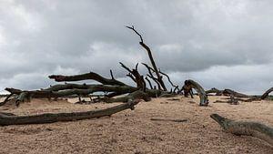 Toter Baum auf der Hoge Veluwe von Dick Doorduin