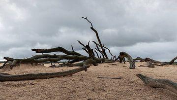 Dode boom op de Hoge Veluwe van Dick Doorduin