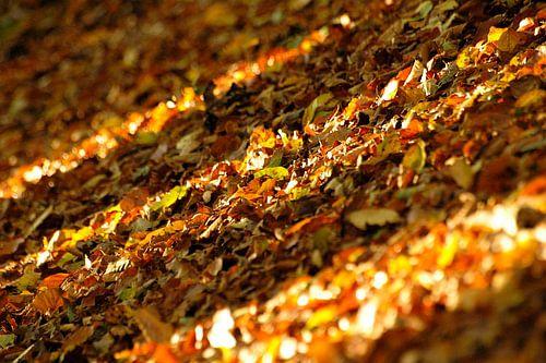 Herfstkleuren in de Achterhoek van