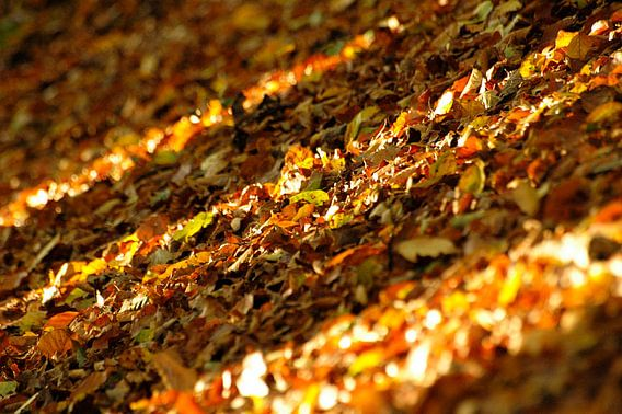 Herfstkleuren in de Achterhoek