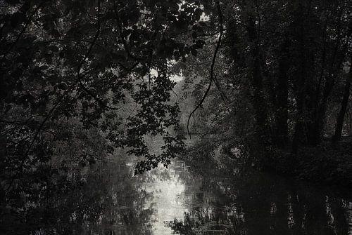 Dark waters van