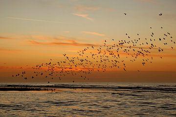 Vogelschwarm nach Sonnenuntergang von Monique van Middelkoop
