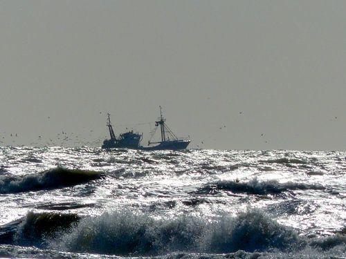 Meeuwen achter vissersboot van