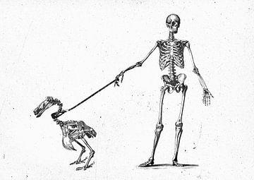 Mein Dodo spazieren gehen von Teis Albers