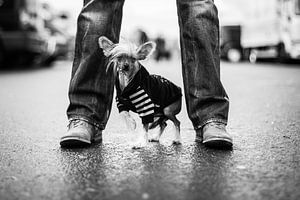 Stoere man met kleine hond van