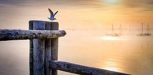 LP 71337546 Zeemeeuw bij een houten paal bij zonsopgang