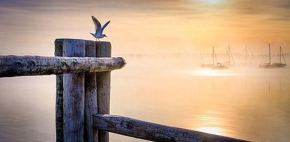 LP 71337546 Möwe an einem Holzpfahl bei Sonnenaufgang