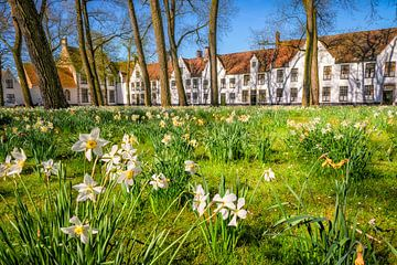Narcissus 'beguinage' von Johan Vanbockryck