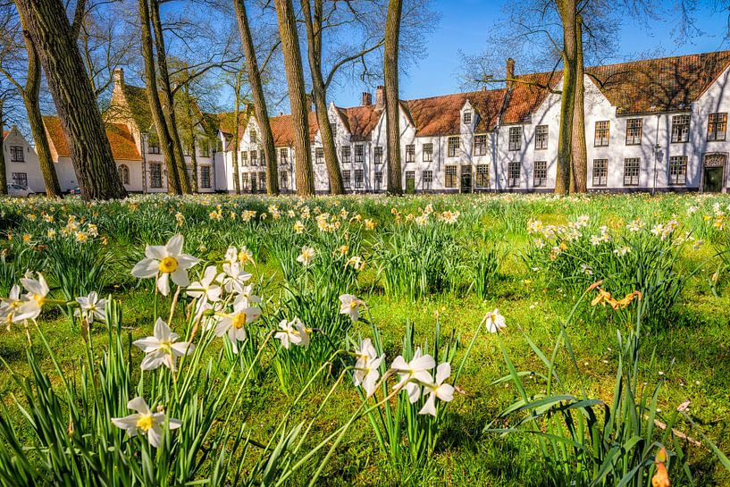 Narcissus 'beguinage' van Johan Vanbockryck