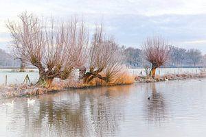 Des saules têtards le long du Kromme Rijn par un froid matin d'hiver.