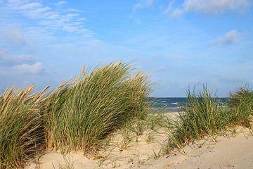 Ruegense duinen van Ostsee Bilder