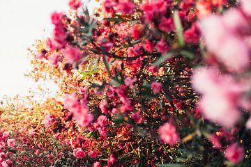 Spanische Sommerblumen im Sonnenlicht von Louise van Gend
