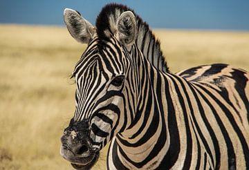 Kleurrijke zebra in Etosha NP van Marit van de Klok