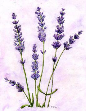 Lavendel von Sandra Steinke