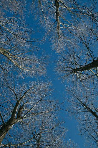 winter, boomkruin