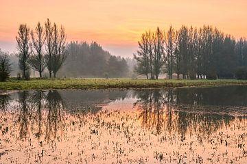 Sonnenaufgang in der Horsterwold von Jenco van Zalk