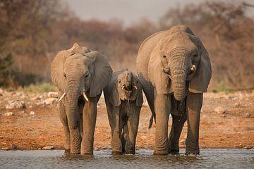 Trinkende afrikanische Elefanten von Michael Kuijl