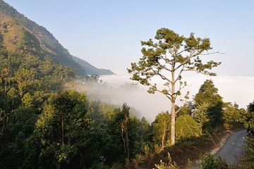 Boom boven de wolken (Bandipur - Nepal) van Wiljo van Essen