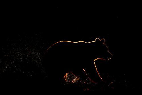 Silhouet van bruine beer