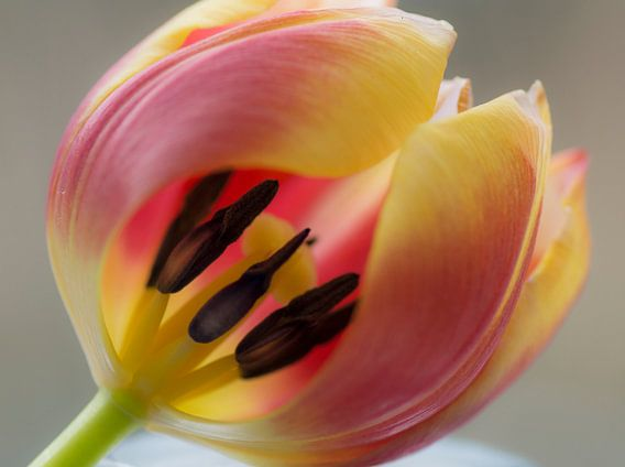 Tulip experience van Birgitte Bergman