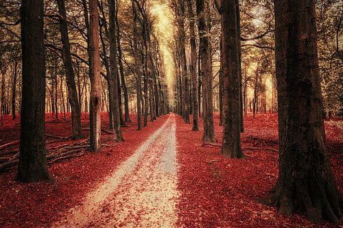 Red Carpet van Cho Tang