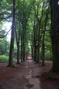 Amerongse Bos van Merijn Loch