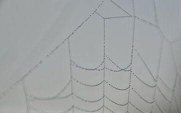 spinnenweb in mist met dauw von eric brouwer