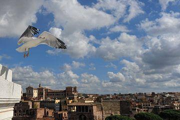 meeuw boven Rome. von Tilly Meijer