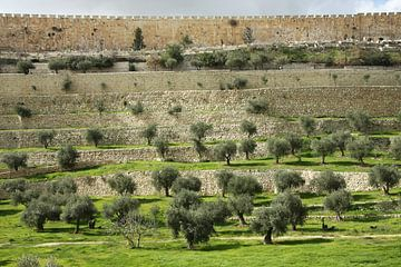 Tempelberg, Jerusalem Israel, alte Mauern, grünes Gras, Olivenbäume von Michael Semenov