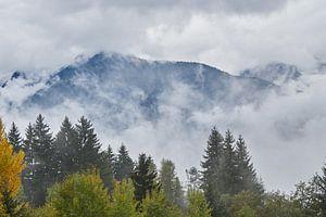 bergen in de wolken met bos op voorgrond