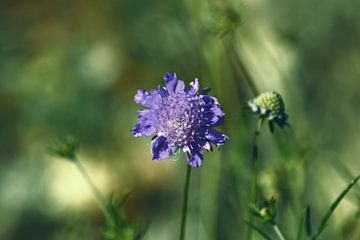 Paarse bloem sur Tashina van Zwam