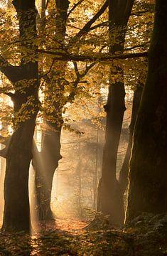 herfst van Remco loeffen