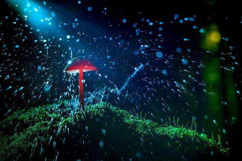Spetterend bos landschap met paddenstoel