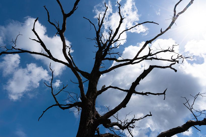 Silhouet van boom in de Veluwe van Anita Visschers