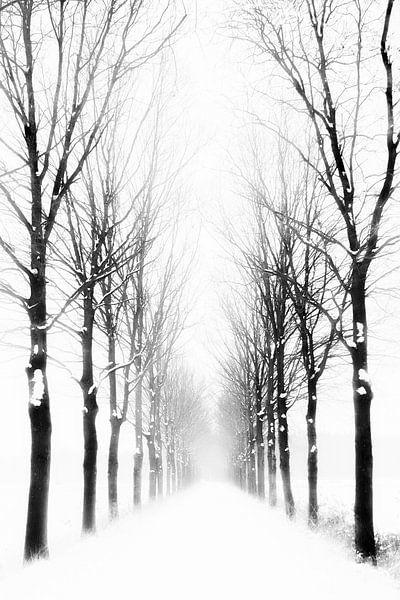 Boslaan in de winter van Richard Mijnten