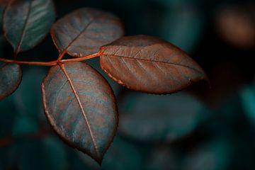Blätter von Saskia Schotanus