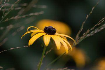 gelbe Herbstpracht von Tania Perneel