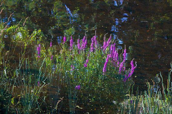 Oeverplanten die spiegelen in het water