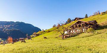 Grindelwald in het Berner Oberland in Zwitserland van Werner Dieterich