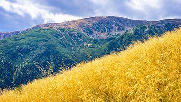 Heuvel in de bergen van Iezer Papusa in Roemenië van Jessica Lokker